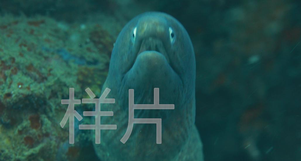 绿海鳝_自然光_全景